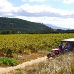 Taking the tractor and cart to Rickety Bridge vineyard