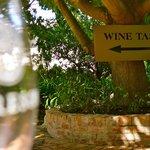 Moreson vineyards