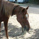 een van de paarden