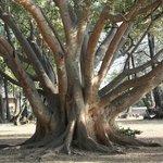 boom in het kamp