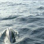 golfinhos próximos ao barco