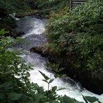 waterfall where salmon swim upstream!