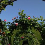 Part of the many rose arches