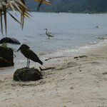 Hammerhead stork and Egret at the beach