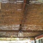 Copertura di bamboo rotta che lascia passare tutte le foglie