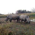 Rinocerontes Elandela