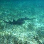 Harmless nurse sharks hanging out
