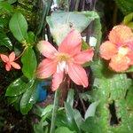 Flowers ªª