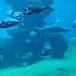 Tanque tiburones