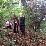 foraging for chestnuts to roast