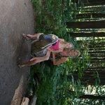 fun tree horse teeter-totter