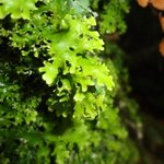 Lush green lichens and mosses
