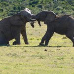 young males play fighting