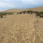 Looking up to Jockey Ridge Sand Dune
