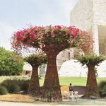 The 'tree' with climbing flowering vine