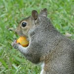 even squirrel's like cheese puffs :O)