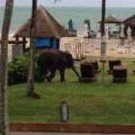 Elephant on beach