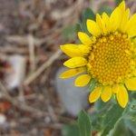 wildflower near campsite #38