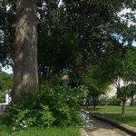 Giardino - Villa Arbusto