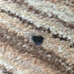 Cigarette burns in the carpet of a NON smoking room