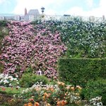 Incredible rose garden