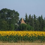 Sunflower Fields and Chateau