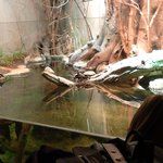 Zoo de Vincennes 1
