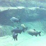 Zoo de Vinennes 2
