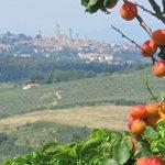Zicht op San Gimignano vanuit de tuin