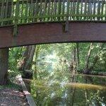 Holzbrücke über Rhin