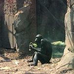 Deze aap is net een mens of zijn wij net apen?