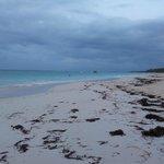 Playa con bastantes algas