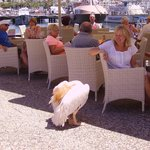Friendly pelican at the harbour