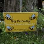 It's a Bee Friendly area.