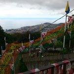 Madeira Pico dos Barcelos
