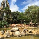 Zoo de PALMYRE juste magnifique ��