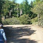 A first glimpse of Prado Toro through the trees