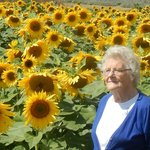 Mother amongst the sunflowers!