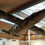 Dover Museum - Doodlebug