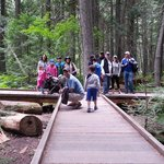 Easy walk for entire family at Trail of the Cedars in Glacier