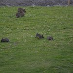 Lovely rabbit family in the hotel yard