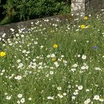 The walled garden is planted as a wildflower meadow