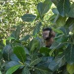Vitor's favourite - monkeys!