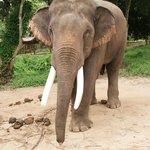 Baan Chang elefantpark