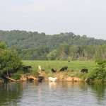 Cattle grazing on an island in the middle of the river.  You see a bit of everything along this