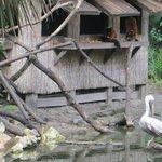Lemurs and Pelicans