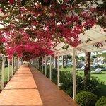 tunnel de fleurs