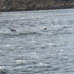 sea otters too!