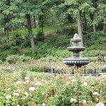 fountain in the center of the garden