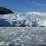 Ice and Harbor Seals at the Front of Holgate Glacier